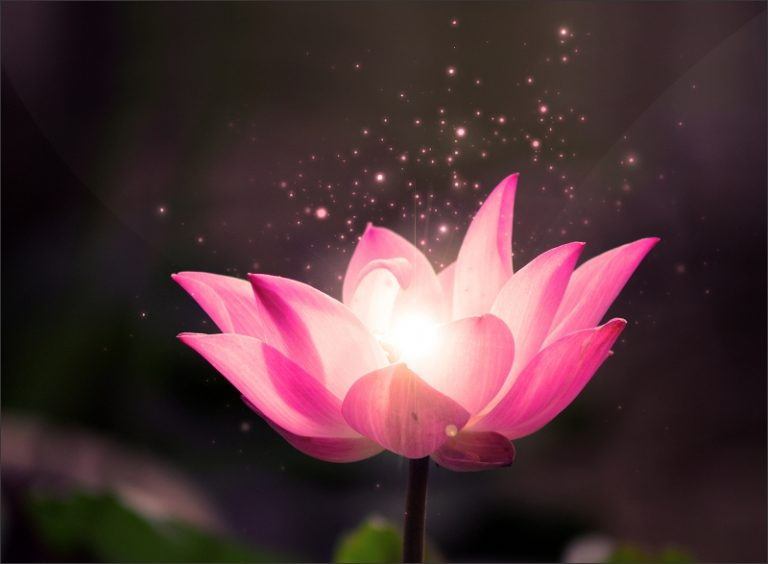 free lotus flower wallpaper